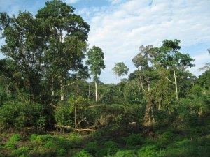 3993805-jungle-outside-of-bangui-0
