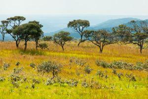 congo-savanna